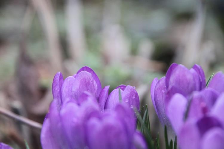 Farbenpracht der Blumen